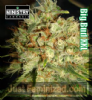 Ministry of Cannabis Big Bud XXL Fem 5 Seeds